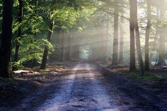 DICTEE 2 : promenade en forêt
